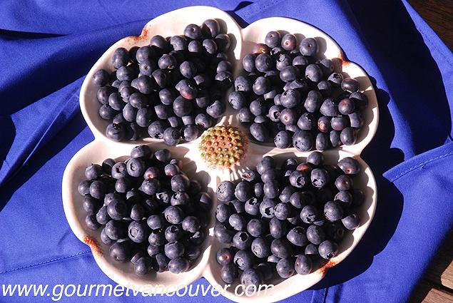 Blueberry豐收可期 : 吃在藍莓成熟時 thumbnail